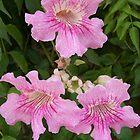 Pink Trumpeteers by justbyjulie