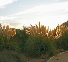 Colas de zorro. by cieloverde