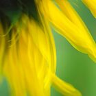 Sunflower Abstract by Christina Rollo