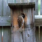 House Sparrow Returns Home by Bill Spengler