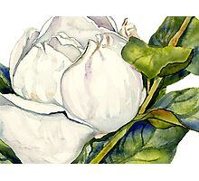 Magnolia Bloom with Leaves Photographic Print