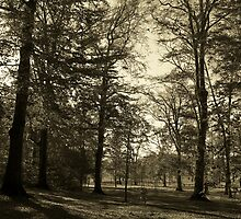 A Sepia Grove by LeeMascarello