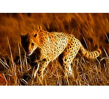 Sprinting Cheetah Photographic Print