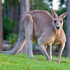 Roo in the morning light by Jason Ruth