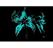 blue flower in a black background Photographic Print