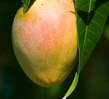 Nearly ripe by Anna D'Accione