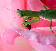 Leaf bug 1 by trevorb