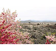 Red and Pink Desert Photographic Print