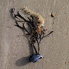 sea tree by lukasdf