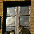 Cats on window by Paolo Del Rocino