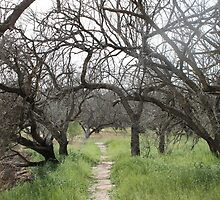 Tree Path by cocot101