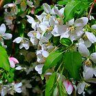 The Blooms ! by Elfriede Fulda