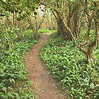 Woodland Path by James Marshall