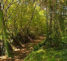 Coastal Forest 2 by Steve Hunter