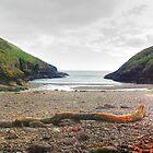 Portally Cove by Joe Cashin