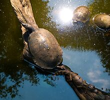 Turtles and lizards by juan jose Gabaldon