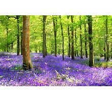 Among the bluebells Photographic Print