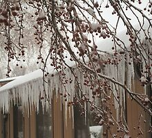 Crabapples and Icicles by LeeMascarello
