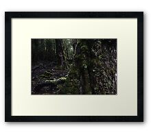 The Enchanted Walk - Cradle Mountain Framed Print