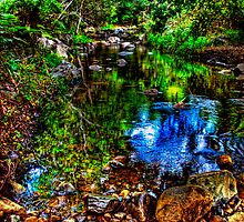 Creek @ Mt Warning - NSW by Jennifer Craker