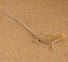 Desert Lizard by CCManders