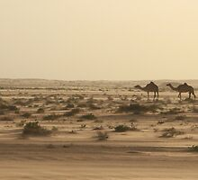 Ships of the Desert by CCManders