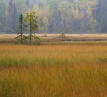 Autumn Bog by Stan Wojtaszek