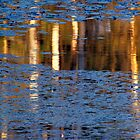 Reflected Birch by Bill Spengler
