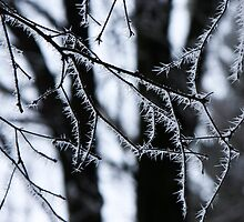 Icy needles ! by Kasia Fiszer
