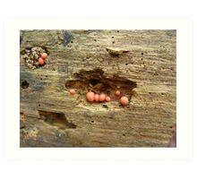 Lycogala epidendrum on dead pine Art Print