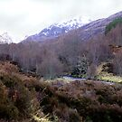 Glen Affric in the Scottish Highlands by jacqi