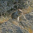Squirrel Camoflage by bicyclegirl