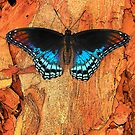 Mourning Cloak Butterfly by LeeMascarello