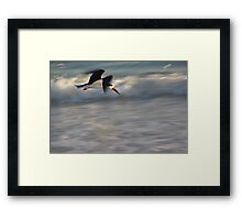 Black Skimmer in Blur  Framed Print