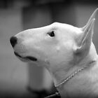 MINIATURE BULL TERRIER by CRYROLFE