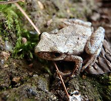 Itty Bitty Frog by KristalStittle