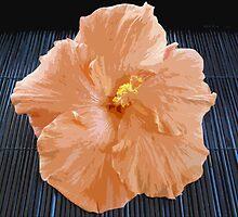 Apricot Lady by Sue Cotton