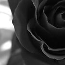 Black and White Rose Number One by Yvonne Carsley