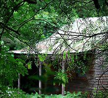 The Forgotten Dream - St Albans NSW by Bev Woodman
