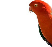 King Parrot by DebMcGrath
