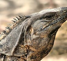 Iguana by Teresa Zieba