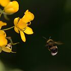 Friendly Bee by Mark Ashton