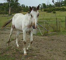 Appaloosa Transformation #5 by skyhorse