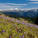 Hurricane Ridge in Bloom by Robert Yone