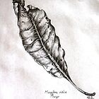 Leaf Study by Viona Pfeiffer