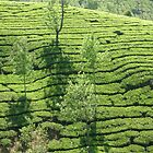 Tea Estate by Siju Doniston