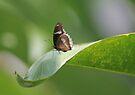 Butterfly 1 by David Clarke