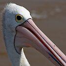 Pelican by Naomi Brooks