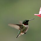 The Tiny Hummer by Debbie Oppermann