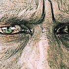 Through the Eyes of India... by Tash  Menon